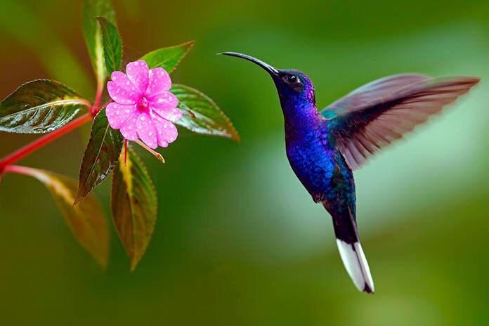 Et si tu devenais un colibri, toi aussi ?